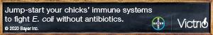 Bayer Victrio