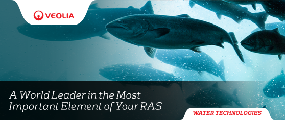 <center>Water Treatment Experts for Recirculating Aquaculture</center>