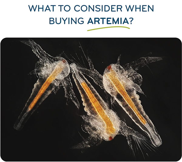 What to consider when buying Artemia