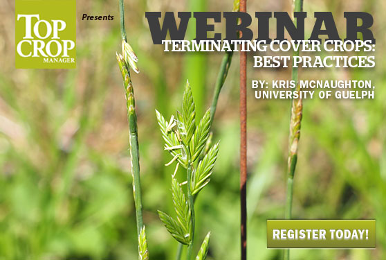 Learn best practices for terminating cover crops