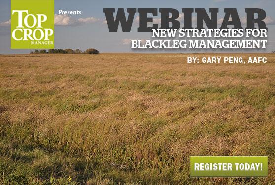 Learn new strategies for blackleg management
