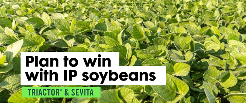 Plan to win with IP soybeans
