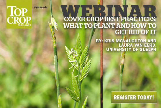 Learn best practices for choosing and terminating cover crops