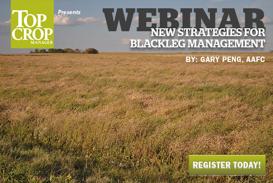 Learn new strategies for blackleg management