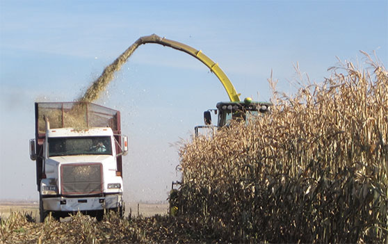 Sponsored: Success in corn silage