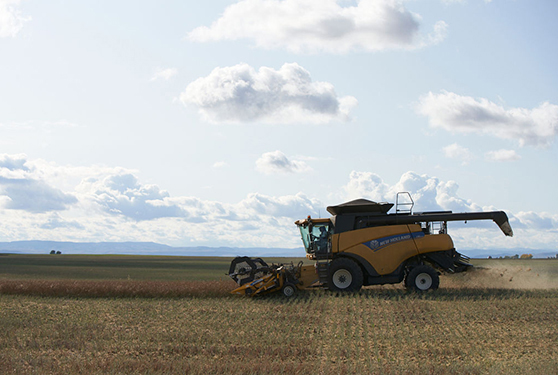 Maximize canola protection and yield – from seeding to harvest