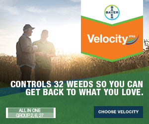 Bayer Velocity